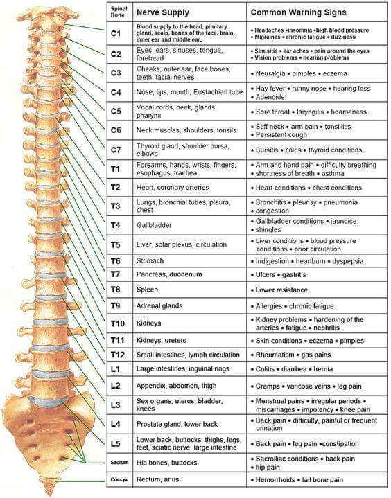 chiropractor York pa